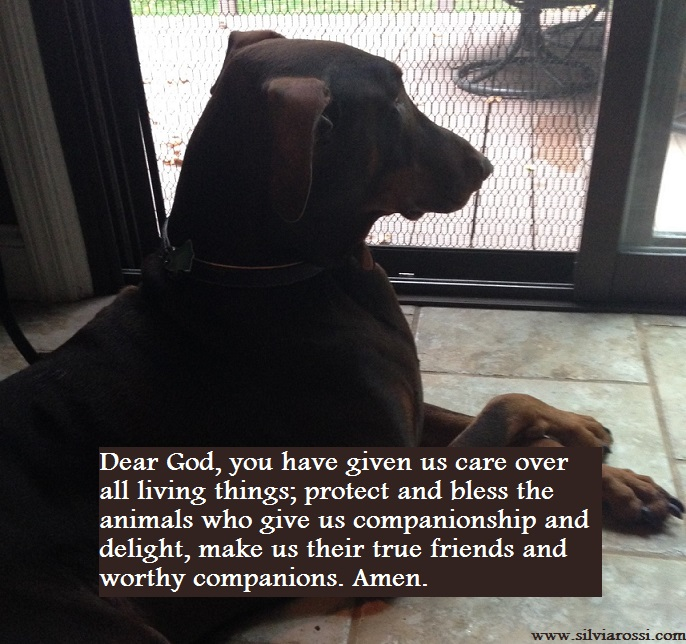 QuotePrayerforAnimals